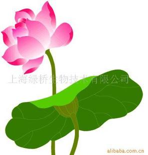 莲子心提取物连心碱的含量要求 [主要成分] 莲心主含生物碱类成分.