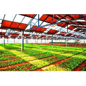 山東壽光華天好的光伏發電蔬菜大棚既省錢又環保節能