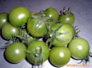 【v番茄番茄小视频】-刘友龙(个体经营)绿色a番茄图片
