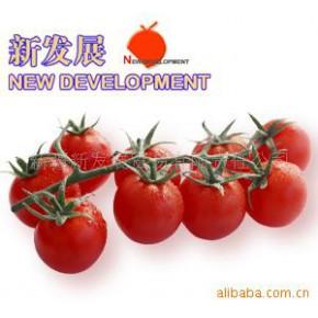 2010新疆产220L桶装28-30%番茄酱