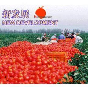 新疆2010年产220L番茄酱