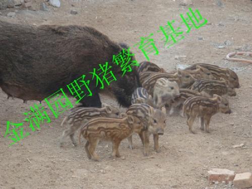 【特种养殖动物】供应|批发|价格|图片|型号