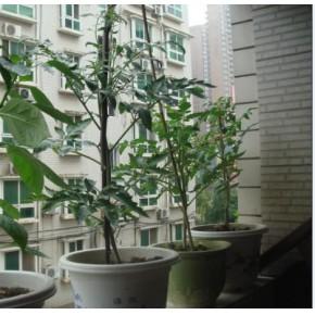 壽光蔬菜智能溫室工程 日光溫室蔬菜大棚冬暖式蔬菜大棚建設