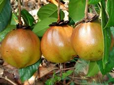 南平高產油茶苗繁育基地