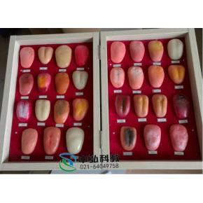 舌苔模型,舌像模型,舌诊断模型,舌诊模型