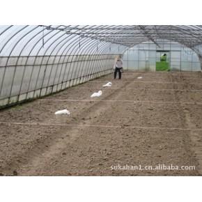 鸡粪鸭粪猪粪等发酵菌/鸡粪鸭粪猪粪等堆肥用发酵菌