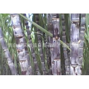 甘蔗 无公害黑皮甘蔗 批发甘蔗 价格优惠