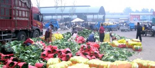 河北省定州市蔬菜基地批發市場玉斌代購中心