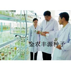 北京金农丰源马铃薯种子早熟高产土豆种子