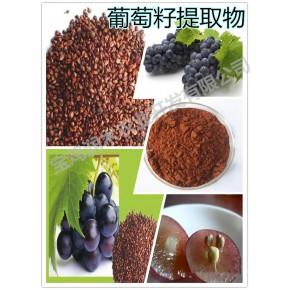 大量供应 《葡萄籽提取物原花青素 95%UV》