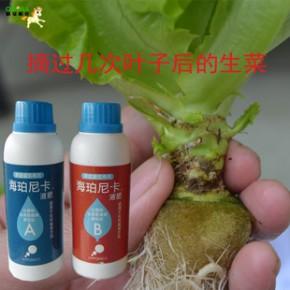 世界品牌進口海珀尼卡無土栽培植物營養液 水培蔬菜花卉通用