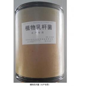 微生物制剂  水产饲料添加剂 植物乳杆菌  渔药