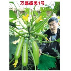 西葫芦黄瓜辣椒番茄种子—寿光万盛