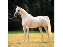 承德马匹繁育供应基地,马匹繁育价格燕龙国际马业