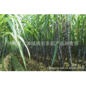 黑皮甘蔗批发,甘蔗种植技术