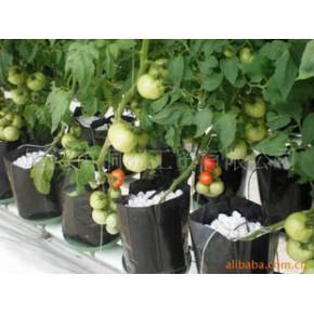 博賽爾無土栽培水培全程自動化控制瓜果類蔬菜種植設施及技術