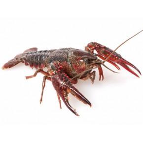 龙虾养殖理想的水产养殖项目