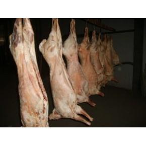 代理新西兰白条羊 全羊 羊蛋 羊腰 批发代理