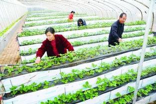 藁城区泽阳鸡槽厂