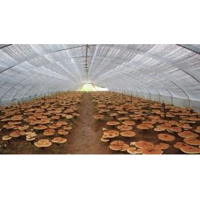 食用菌温室建设