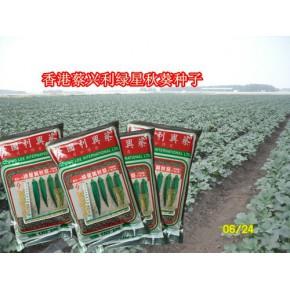 香港原装进口绿星水果秋葵种子